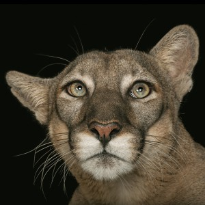 Photographing the world's animals to help stop the extinction crisis